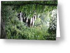 Trees Fallingwater  Greeting Card