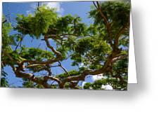 Trees In Bermuda Greeting Card