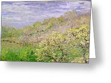 Trees In Blossom Greeting Card