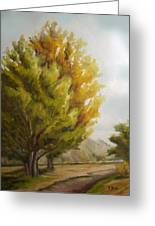 Trees In Boulder Greeting Card