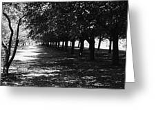 Trees In Chicago Greeting Card