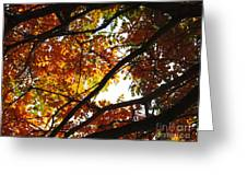 Trees In Fall Fashion Greeting Card
