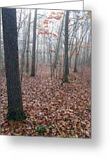 Trees In Foggy Fall Woods Greeting Card