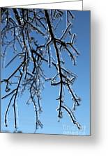 Trees In Ice Greeting Card