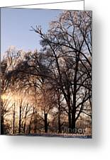 Trees In Ice Series Greeting Card