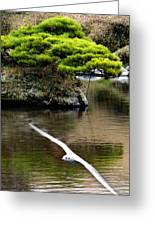 Trees In Japan 14 Greeting Card