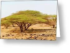 Trees In Kenya Greeting Card