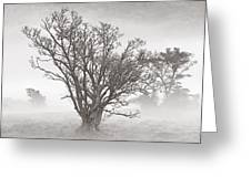 Trees In Mist- St Lucia Greeting Card