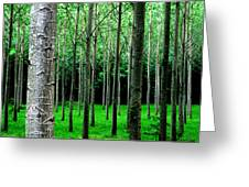 Trees In Rows Greeting Card by Julian Perry