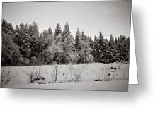 Trees In Snow Greeting Card