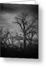 Trees In Storm In Black And White Greeting Card