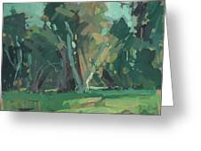 Trees In Sunlight Greeting Card