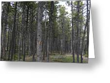Trees In The Campground Greeting Card