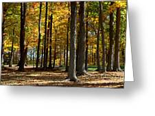 Tree's In The Forest Greeting Card