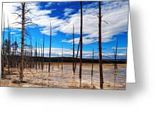 Trees In The Midway Geyser Basin Greeting Card