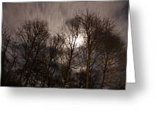 Trees In The Nigh Greeting Card