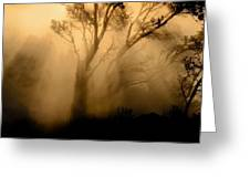 Steaming Trees Greeting Card