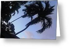 Trees In The Tropics Greeting Card