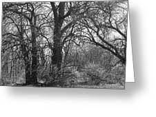 Trees In Twilight Greeting Card by Terry  Wiley