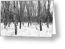 Trees In Winter Snow, Black And White Greeting Card