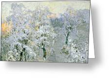 Trees In Wintry Silver Greeting Card
