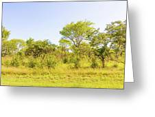 Trees In Zambia Greeting Card