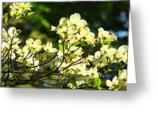 Trees Landscape Art Sunlit White Dogwood Flowers Baslee Troutman Greeting Card