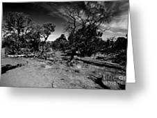 Trees Of Canyon Lands Greeting Card