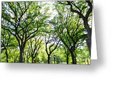 Trees Of Central Park, Nyc Greeting Card