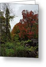 Trees Of Colorful Leaves In Autumn Mi Greeting Card