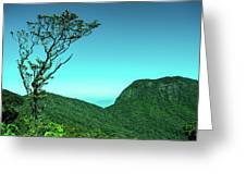 Trees Of Life Greeting Card