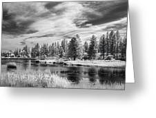 Trees Of The Preserve Greeting Card