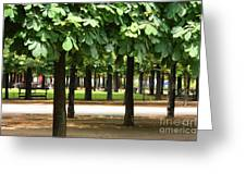 Trees Of Tuilieres Greeting Card