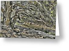 Trees Of Ziarat Greeting Card
