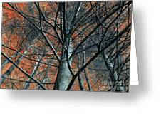 Trees On Red. Greeting Card