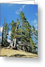 Trees On The Edge 1 Greeting Card