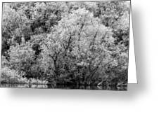 Trees On The River Greeting Card
