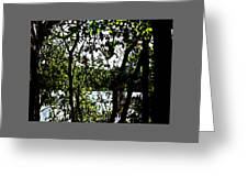 Trees Over Looking Water Greeting Card