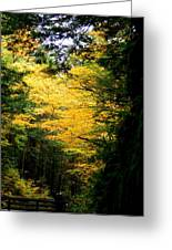 Trees Over The Flumes Gorge Greeting Card