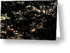 Trees - San Salvador II Greeting Card