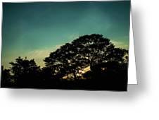 Trees - San Salvador V Greeting Card