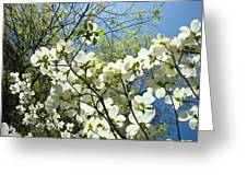 Trees Sunlit White Dogwood Art Print Botanical Baslee Troutman Greeting Card