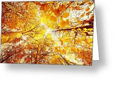 Trees Toward The Sun Greeting Card