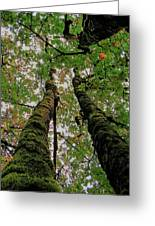 Trees Upward View Greeting Card