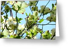 Trees White Dogwood Flowers 9 Blue Sky Landscape Art Prints Greeting Card