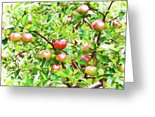Trees With Red Apples In An Orchard Greeting Card