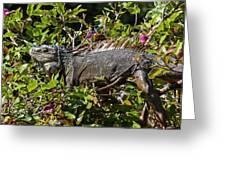 Treetop Iguana Greeting Card