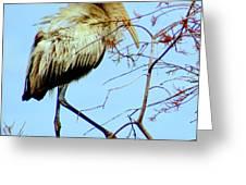 Treetop Stork Greeting Card