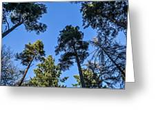 Treetops Greeting Card