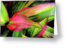 Tri-color Leaves Greeting Card